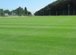 サッカー場天然芝コート
